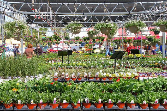 Интернет магазин цветов и растений