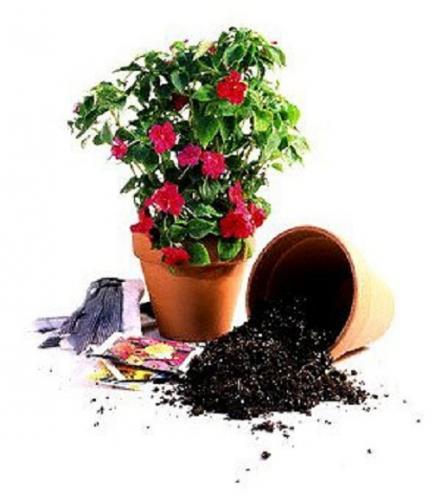 Как правильно сажать цветы в горшки