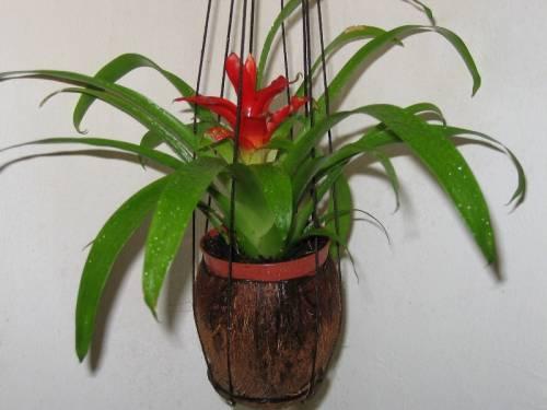 Растения вязанный крючком танк