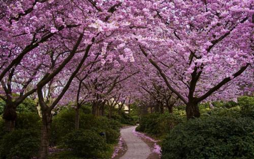 японские цветі