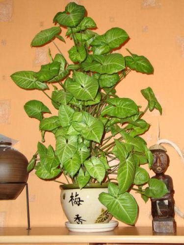 Домашние растения фото и их названия