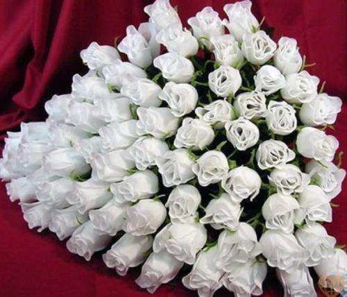 красивые фото белые розы