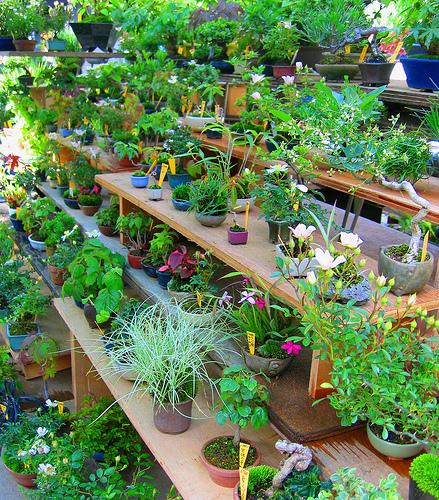 Несомненно комнатные растения делают