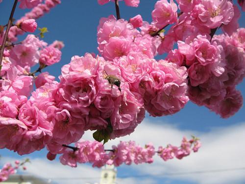 Названия красивых цветов для идеальны букетов