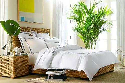 комнатные растения для спальни