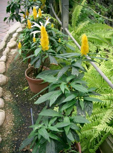 Красивые желтые комнатные цветы для