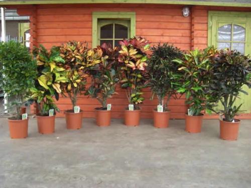 разновидность комнатных цветов фото: