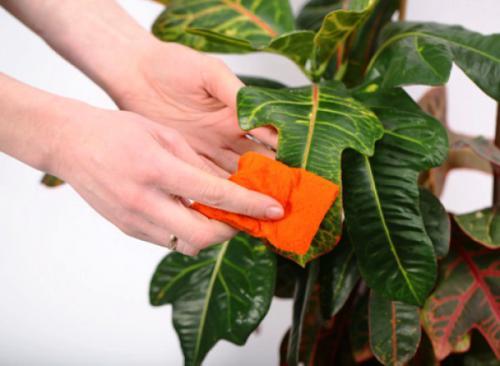 кислород для комнатных растений