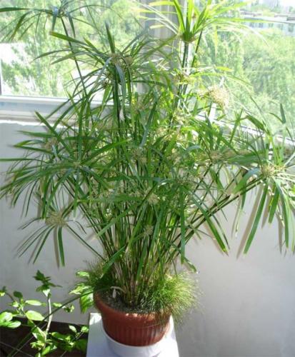 Подчеркивают грациозность растения