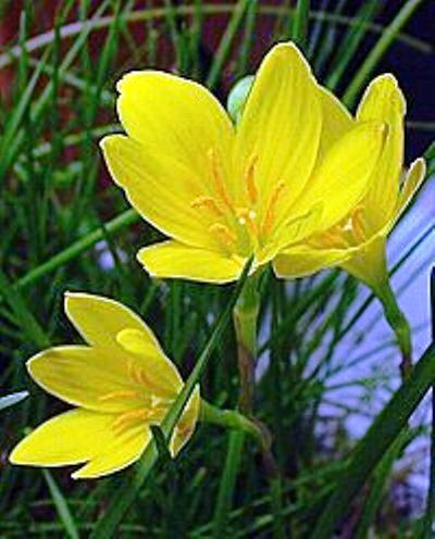 Кмнатн рослини фотокаталог