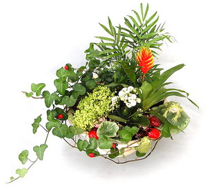 Комнатные цветы композиции из