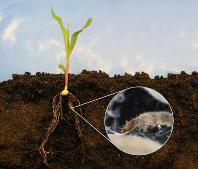 Вредители комнатных растений в почве