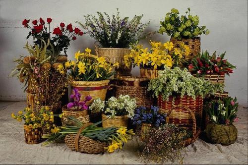 Продажа комнатных цветов для создания