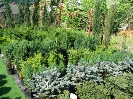 Питомника декоративных растений