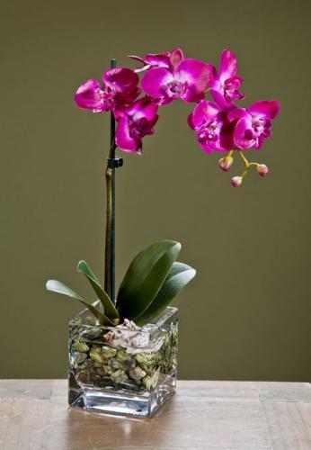 Орхидея уход полив