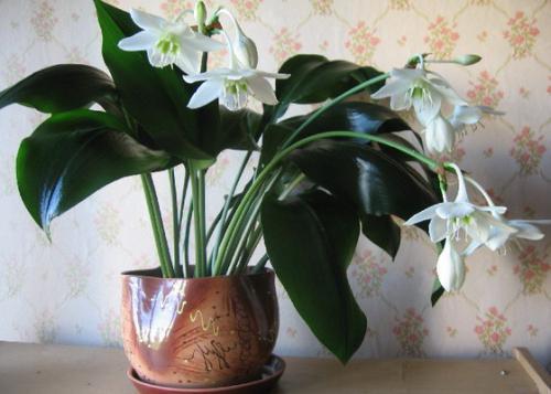 Аммиак можно поливать цветы