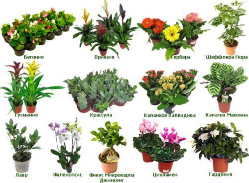 Цветы в доме. фото и названия