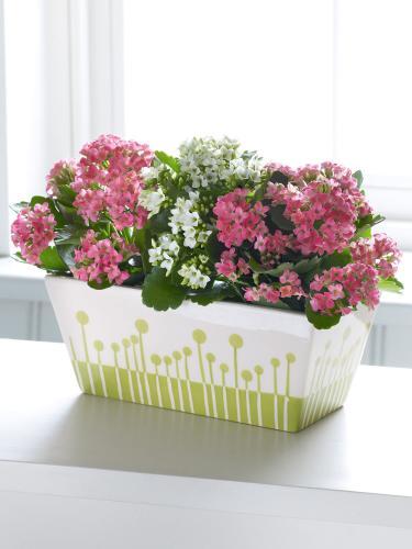 Комнатные цветы: фото и уход для начинающих цветоводов