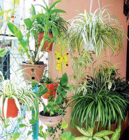 Какие полезные комнатные растения вы