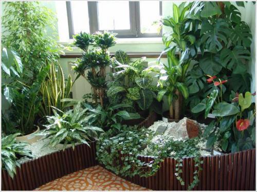 Вредителти комнатных растений в почве