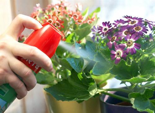 Надоедливые вредители комнатных цветов – как эффективнее с ними бороться