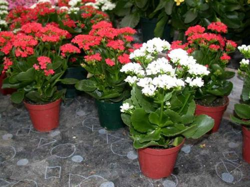 комнатные цветы фото и название уход за ними