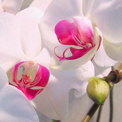 Правильный выбор цветка