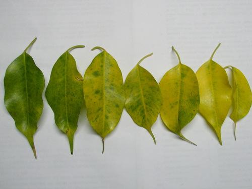 Осенний синдром: почему у цветов желтеют листья?