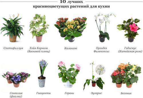 комнатные цветы. фото и описание