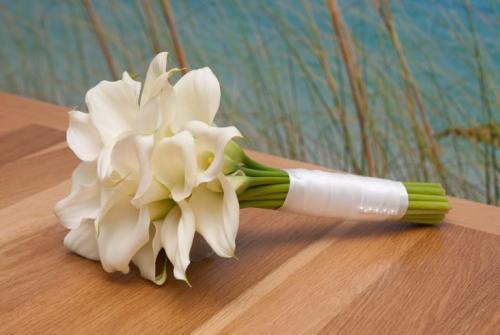 Каллы, цветы смерти: суеверия, приметы