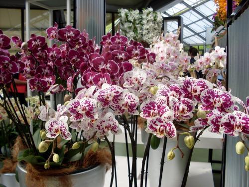 Почему долго не цветет орхидея: обзор причин и особенностей ухода за растением