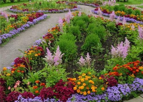 Самые неприхотливые цветы для клумбы и цветника