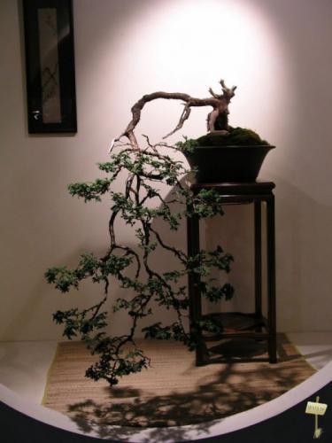 Маленькие японские деревья: искусство выращивания бонсай