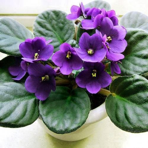 Как размножается фиалка: методы и особенности ухода за молодым цветком