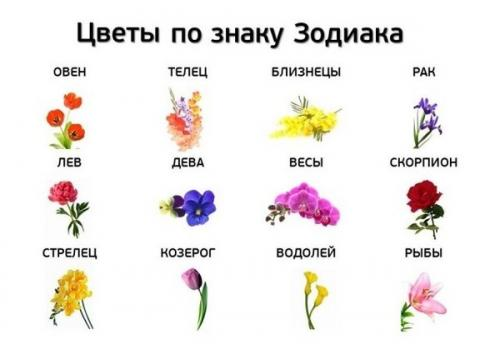 орхидея он подходит уход знаком зодиака каким