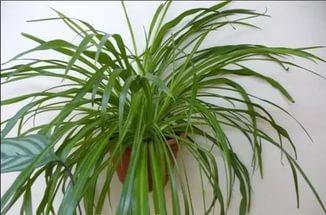 Сумеречный лес или комнатные растения, растущие в тени