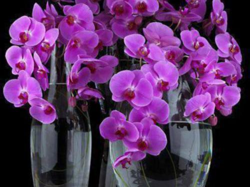 Почему опадают цветы у орхидеи: наиболее частые причины и способы их устранения