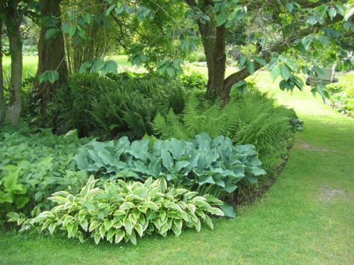 Папоротник садовый: основные виды, выращивание и уход