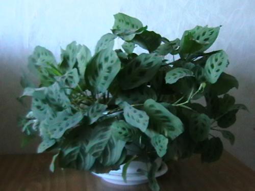 Картинки с растениями которые любят