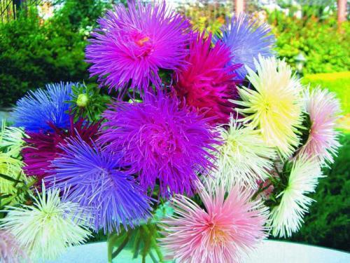 Садовые цветы: 8 самых неприхотливых популярных растений | 375x500