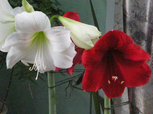 Названия комнатных цветов с