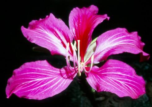 Мир тропической экзотики  Экзотические комнатные растения